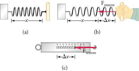 Image a shows a spring with a handle connected to a weight. The length of the spring is x. Image b shows a hand pulling on the spring. The length that the spring extends after being pulled is labeled Triangle x. An arrow pointing from the hand to the weight is labeled F subscript restore. Image c shows a scale with a measurement of 6. The length from 0 to 6 is labeled triangle x. An arrow pointing from the tip of the scale to 6 is labeled F subscript restore.