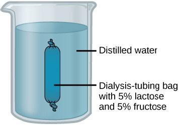 The figure shows a beaker filled with water with a sealed dark blue bag floating in the water. The water is labeled Distilled water. The blue bag is labeled Dialysis-tubing bag with 5 percent lactose and 5 percent fructose.