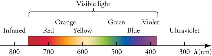 This diagram focuses on the visible section of the electromagnetic spectrum. A horizontal arrow represents wavelengths of light decreasing from left to right. The arrow is calibrated with numbers ranging from 800 on the left to 300 on the right, and the line is labeled with the Greek letter lambda, followed by the letters n m in parentheses. Above the arrow is a colored band stretching from about 760 up to about 420. The band, labeled as 'Visible light', shows colors labeled as 'Red', 'Orange'