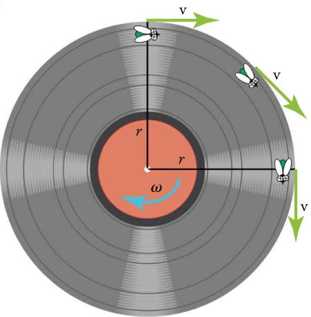 The figure shows an illustration of a vinyl record with an arrow omega (angular velocity) pointing in a clockwise direction. There are two lines for the radius, marked r, one going from the center up and the other going from the center to the right. There are three flies on the record. One is positioned at the top of the record on the vertical radius. A v (velocity) arrow points to the right. A second fly is half-way around the circumference toward the horizontal radius and an arrow v is pointing tangenti
