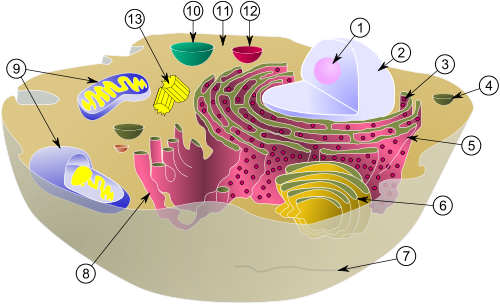 Euk_Biological_cell_5