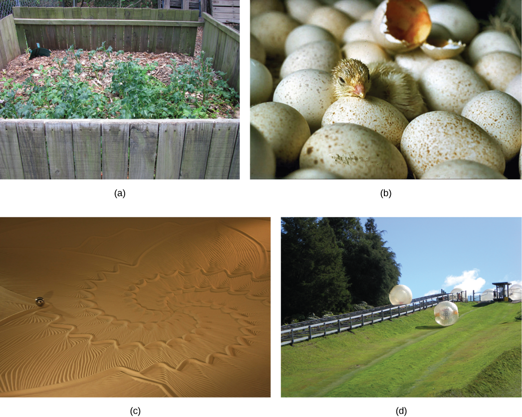 Photo of four different images that include one image of a small fenced-in area with brown debris and green plants, an image of bird eggs with one egg shell broken open and a baby bird sitting between the eggs, an image of sand with a decorative pattern, and an image of 2 large spheres, one sitting near a fence, one sitting on a lawn of grass.