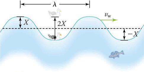 A seagull bobs up and down on a sinusoidal-shaped periodic ocean wave with a given wave velocity of νw. The wavelength λ is shown as the distance from one crest to the next crest. The amplitude X is shown as the distance between the resting position and the crest. The total distance traveled by the seagull in one cycle or period is shown as 2X.