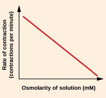 The figure shows a line graph. The x axis is labelled Osmolarity of solution (m M). The y-axis is labelled Rate of contraction (contractions per minute). The graph shows a red, straight diagonal line. The origin of the line is its highest point, which is near the top of the y axis. The line ends at its lowest point, which is just above the x-axis at the right side of the graph.