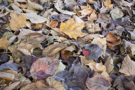 Decomposing leaves
