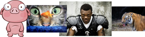 Collage of images: cartoon pig staring straight ahead, cat staring at a fish in a bowl, football player staring straight ahead, tiger staring off to the left