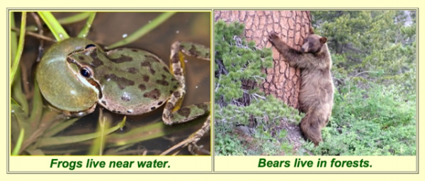 Click the picture to match the habitat to the living organism.