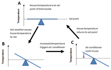(A) a graph of temperature and a balance at the set point. an arrow points to B where the temperature increased and unbalanbed. The air conditioner triggers and points to C where the air conditioner cools and the balance returns back to normal.