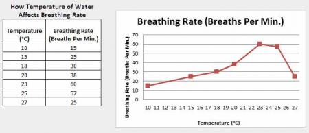 Data Table and Graph of Breathing Rate