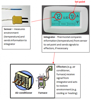 photo of a thermocouple with arrow pointing to a thermostat with arrow pointing to air conditioner and heater. The thermocouple is labelled sensor, the thermostat is labelled integrator, and the air conditioner and furnace are labeled effectors.