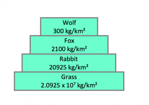 pyramid of biomass in organisms