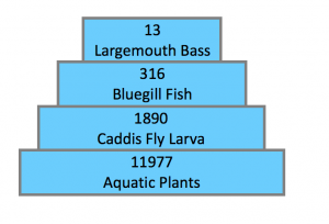pyramid of numbers of organisms at trophic levels