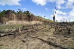 Deforestation in the Phillipines