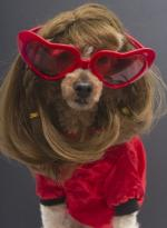 dog%20with%20red%20sunglasses%20